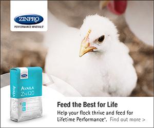 Poultry Disease Diagnosis - Poultry Producer